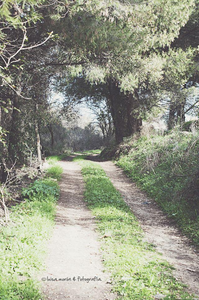 camino-blog