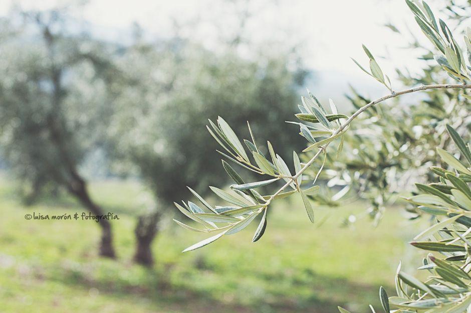 rama-olivo-blog