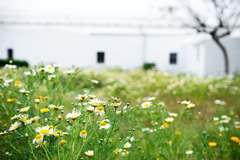 Luisa-Moron-Fotografia-6886