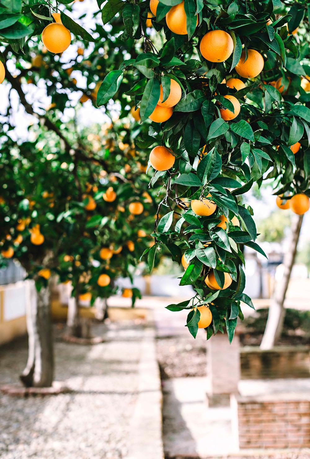 Aljarafe-Sevillano-Fotografia-Luisa-Moron